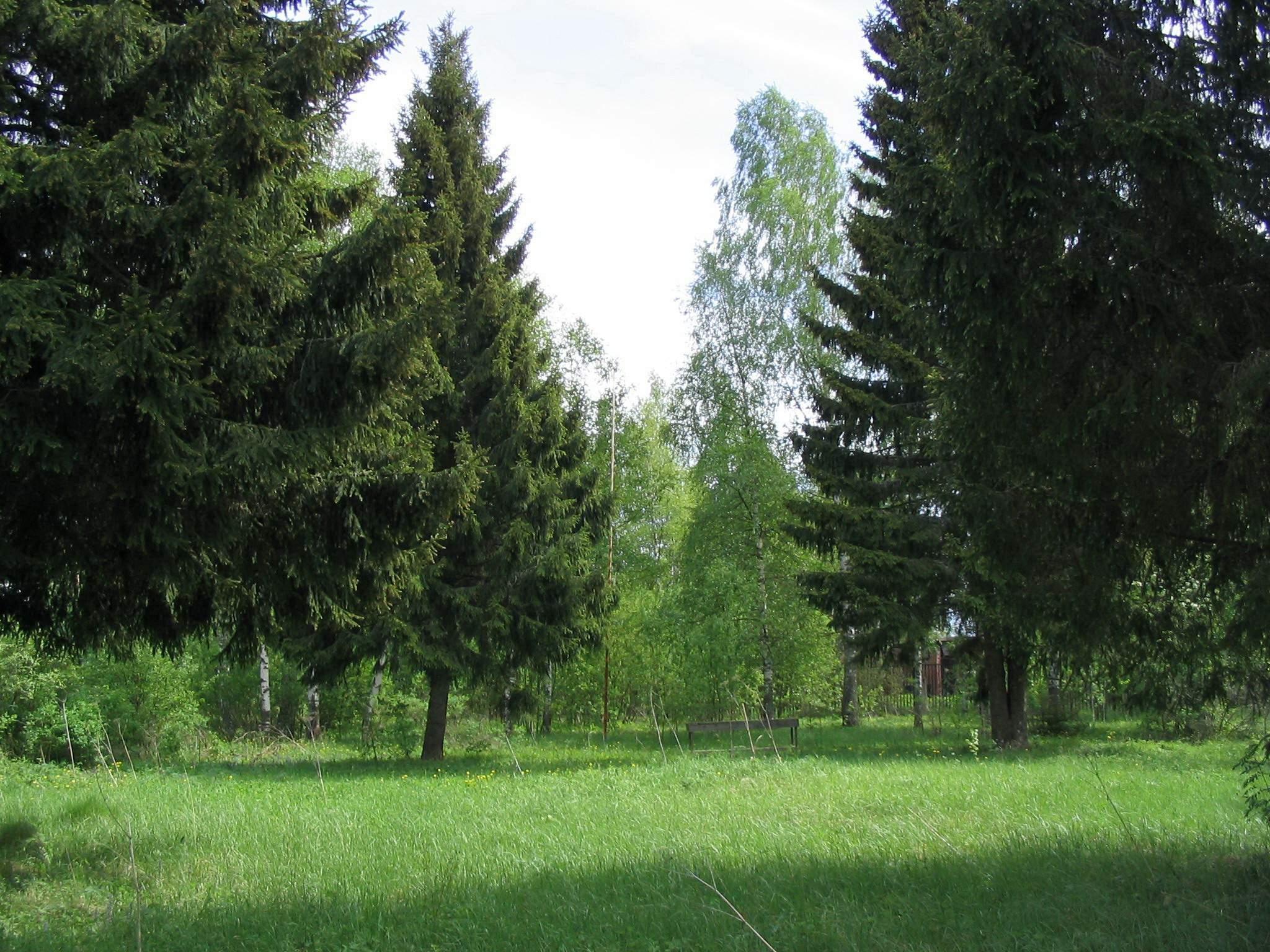 Аренда лесного фонда